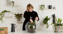 How Terrarium Help You Create a Nice Environment Around You