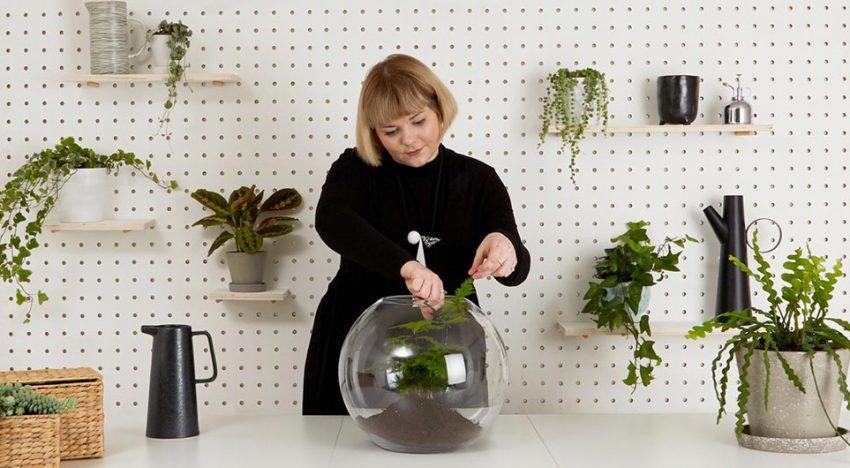 How Terrarium Help You Create a Nice Environment Around You