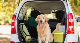 What Makes Pet Relocation SG a Leading Name in Pet Boarding Services
