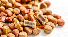 Picking the Right Pet Food
